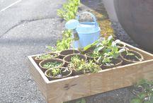 Urban Gardening / Städte werden grüner. Ideen für die eigene Gemüsefarm oder eigenen Garten auf kleinen Raum.