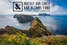 Protect Our Coast & Oceans Fund on CA State Tax Form / You now have an option to donate to our grants program when you do your state taxes! The name of the fund is Protect Our Coast & Oceans. More info on the good work you will be supporting here: www.checkthecoast.org / by California Coast