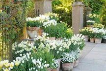 gardens + cottage