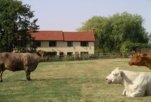 Animals / Animals to see in the countryside