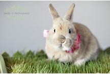 bunny l <3 v e / pet bunnies and fun products