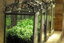 piante...fiori.. / Piante...