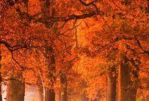 marvelous nature