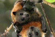 CRITTERS: batty