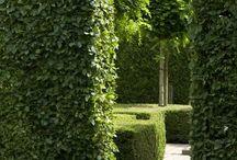 ab evergreen options