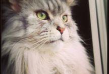 Il Mio Gattone / Gatto
