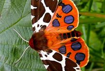 Moth and Butterflies and other creatures with wings / Nature has the most beautiful colour combination