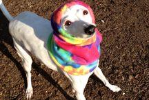 Nancy's Dog Paws Boutique Dogie Hood Hoods