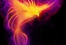 The Phoenix / I want to get a tattoo of a Phoenix that wraps around my side. This it the research part.
