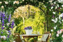 Climbing roses, roses and arbors