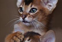 Cats-kočáci a kočinky