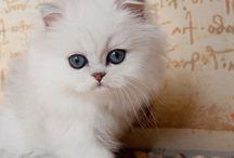 Choosing my birthday cat