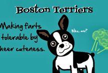 Bostonek
