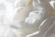 ~ white peony ~ / by Putu Sita