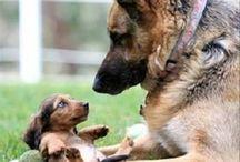 Doggys