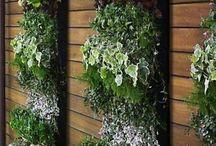 Vertical garden  / Vertical garden