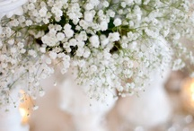 Baby's Breath x / by Wisteria Avenue