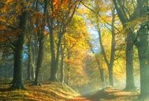 Seasons scenery