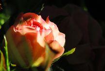 Наши цветы / Какие бывают цветы в огороде)