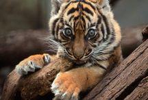 Sweet and beautiful animals ♡ / Cute, sweet, adorable and soo beautiful animals big and small.  //Söta,bedårande och vackra djur. Stora som små.