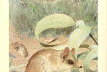 zvířata, ilustrace, pravěk