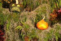 Halloween Creations / My Favorite Holiday  / by Christina Sabourin