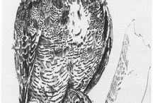 Совушки и другие птички