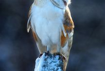 Owls. / by °EllingtonA°