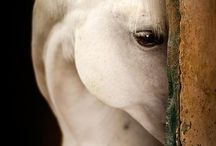 """animol lover / """"An animal's eyes have the power to speak a great language."""""""