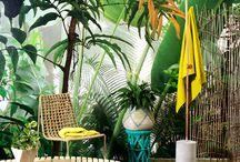 Adventurous jungle house