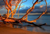 príroda-stromy,more,skaly,obloha