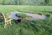 garden duck pond