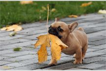adorable pictures / by Rita Basey