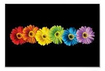 Flowers & Plants / by Tessa Hackworth LaChapelle