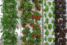 Indoor and small outdoor hydroponics