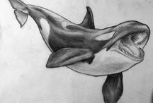 Drawing whales and dolphind