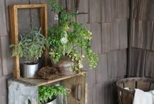 Things to keep alive / Garden ideas