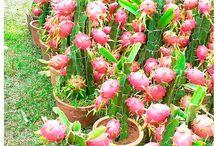 tanaman / sebenernya sih pengen banget punya tanaman dan pengen banget ngerti soal tanam menanam / by Maya Nathalia