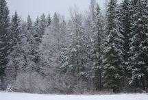 WinterMoments / WinterMoments
