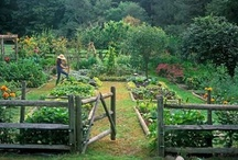 Vegetable Gardens / Some vegetable and herb gardens to aspire to!