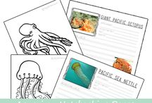 SEA LIFE PROJECTS