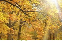 #Heliocare ama el Otoño / Planes para que podáis descubrir esta maravillosa época del año.