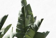 Limelight | Plants Photography