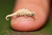 Nature.Reptiles / by Daniel Walsh
