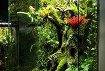 aquarium terrarium vivarium