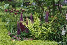 Beautiful Ferns / Beautiful Ferns.