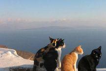 cat & landscape②