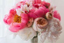Wedding / by Jen Enns