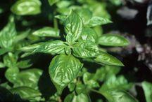 Fines herbes et jardin / Sss