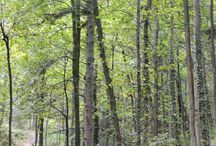 Nature - Forêts
